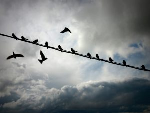 Pájaros en el aire_prologo