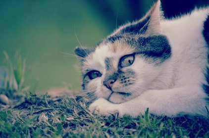 Un gato que mira con desconfianza