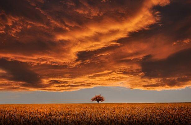 la escena de un arbol durante una puesta de sol tormentosa genera emociones y pensamientos traducidos por el escritor en un tiempo narrativo