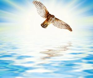 Mi proceso en escribir y meditar, un águila en el aire