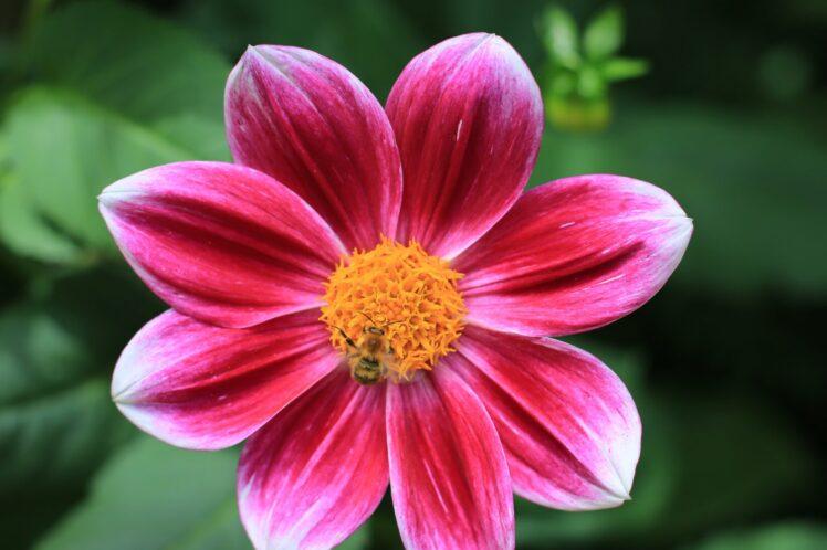 la flor única que se abre cuando encuentras la inspiración en la escritura