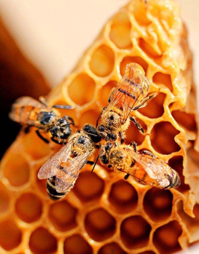 la colmena de abejas escritoras